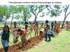 Tree Plantation Initiative